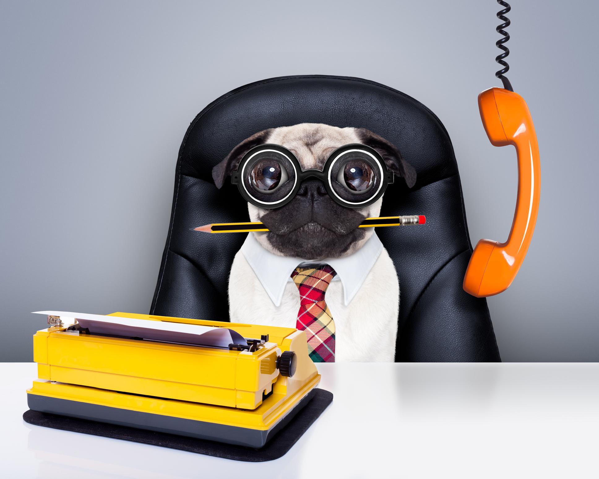 Hundar med jobb