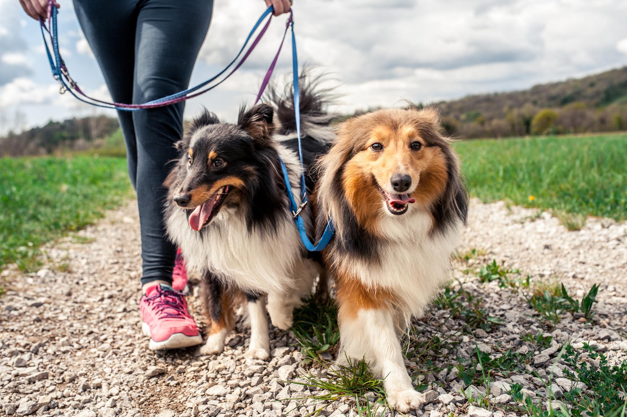Populära hundraser i världen