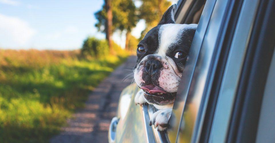 Hundar i bil