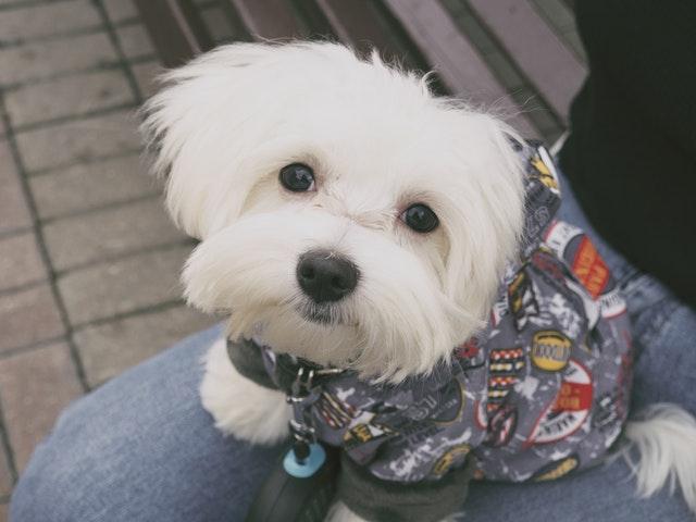 Hundkläder – praktiskt eller olämpligt?